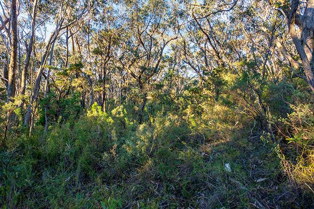 11 Myall Avenue, Leura NSW 2780