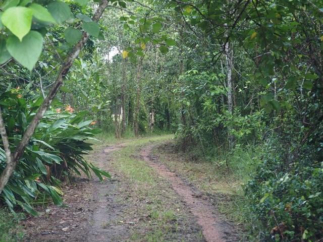 6 Lindsay Road, Carmoo QLD 4852