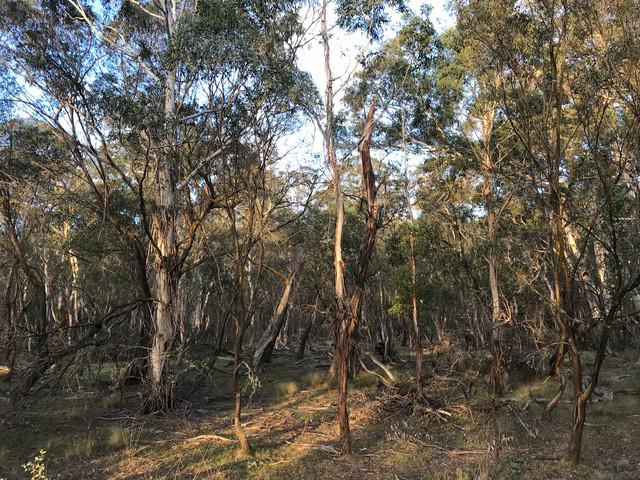Creewah Road, NSW 2631