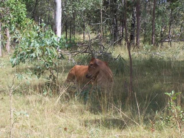 L11 Sues Road, Horse Camp QLD 4671