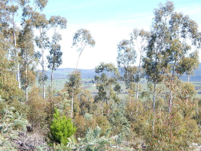 Lot 211 Foggy Forest Drive, Anembo NSW 2621