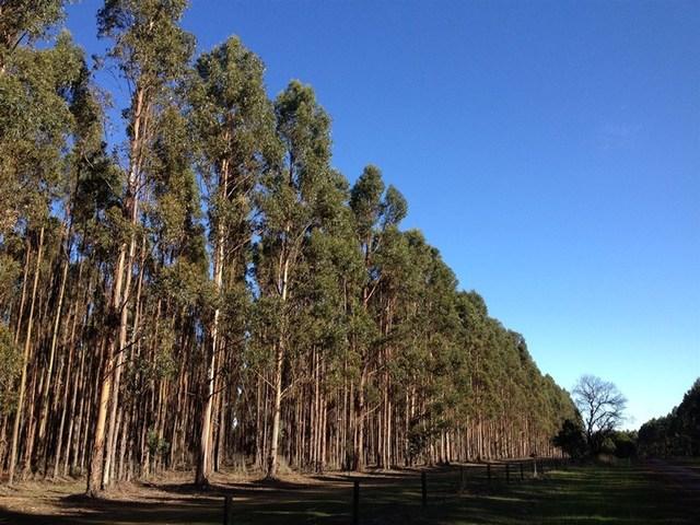 14 Forestry Properties, Ballarat Central VIC 3350
