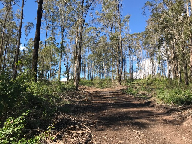 528 Lowes Lane, Booral NSW 2425