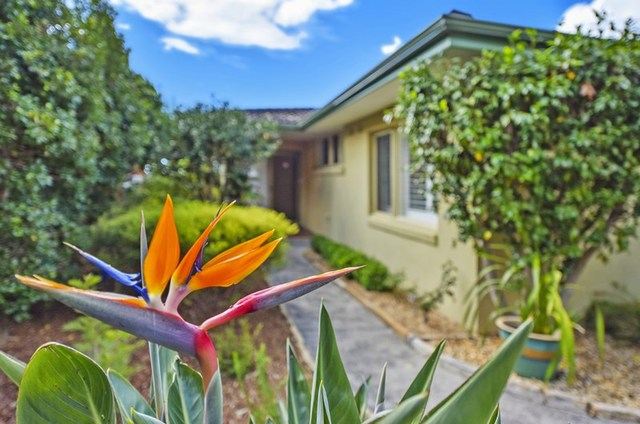 31 Jindabyne Street, Frenchs Forest NSW 2086