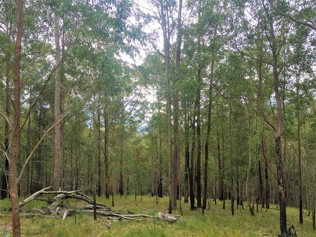 277 Manning Hill Road, Bunyah NSW 2429