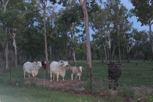 banyan road Eva Valley Estate, Batchelor NT 0845