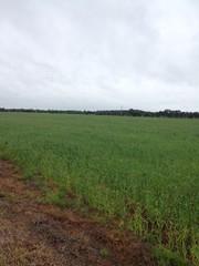 Farm 1045