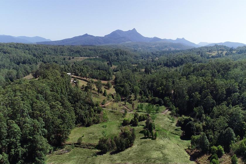 Arborists in Mount Burrell