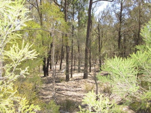 LOT 306 Happy Lane, QLD 4421