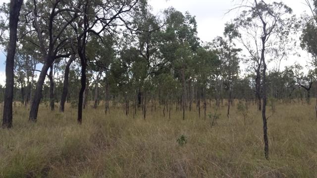 25 Dalrymple Drive, Millstream QLD 4888