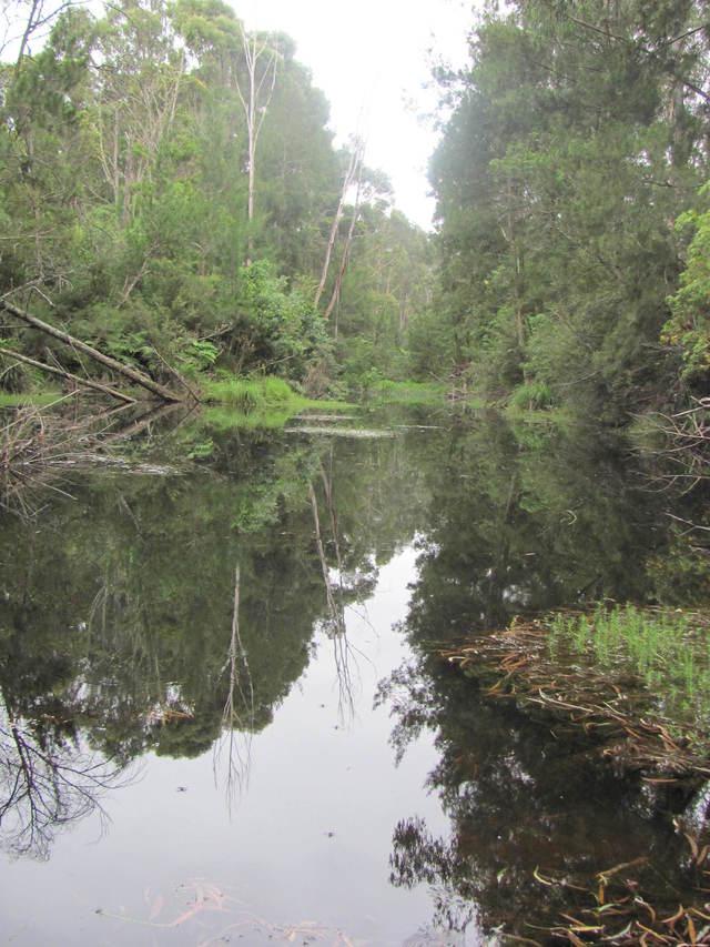 Lot 2, 375 Wamban Road, NSW 2537