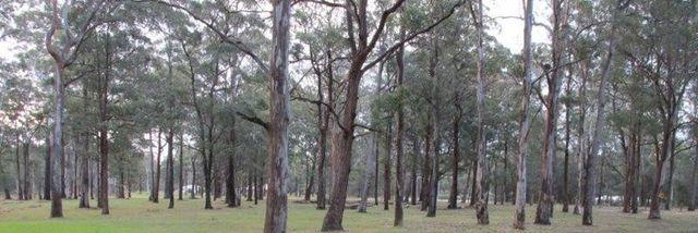 (no street name provided), Darawank NSW 2428