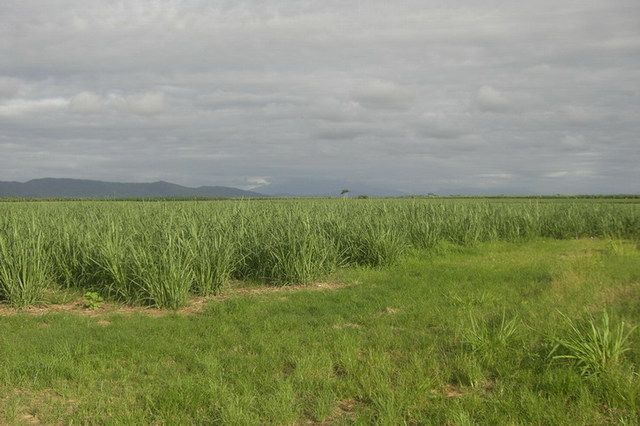 (no street name provided), Cowley QLD 4871