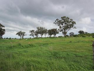 Lot 1172, Old Cootamundra Road