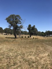 Lot 12/null Banksia Court