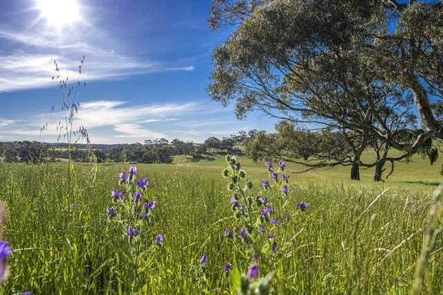 1 Square Mile Estate, Clare SA 5453
