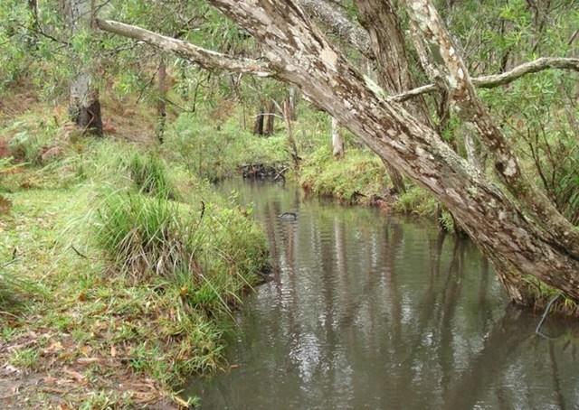 (no street name provided), Wondecla QLD 4887