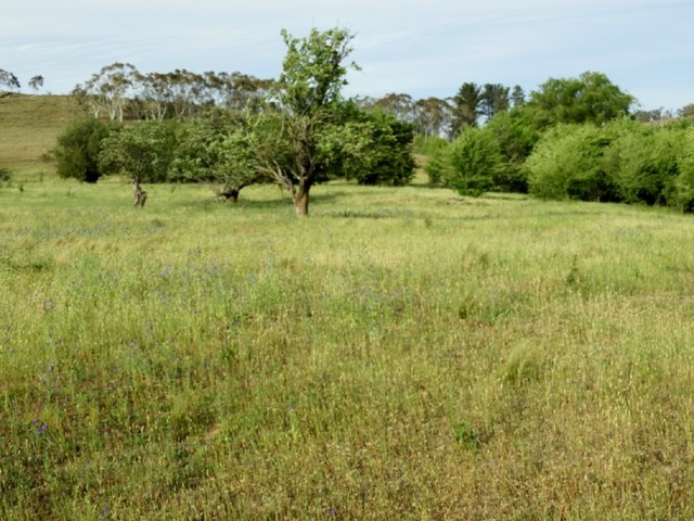 Lot 25 Pomeroy Road, NSW 2580