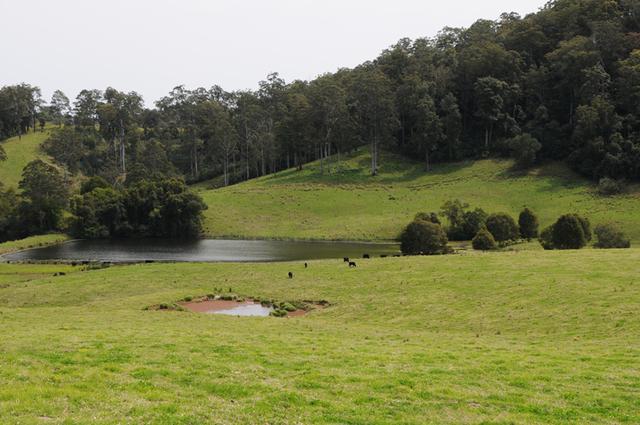 2354 Waukivory Road, Waukivory NSW 2422