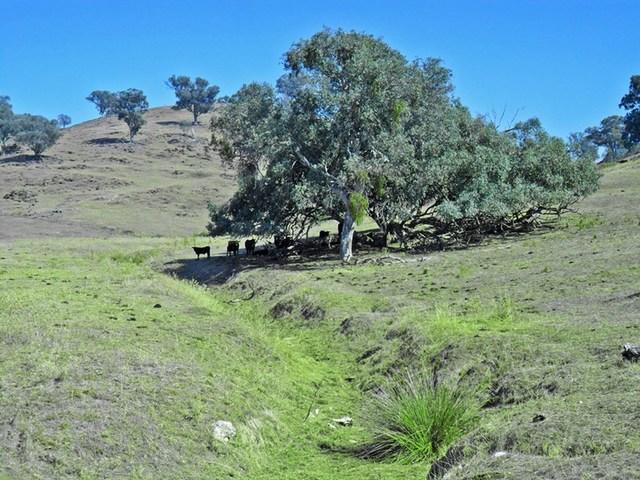 Lot 3/null Five Mile Creek Road, Gundagai NSW 2722