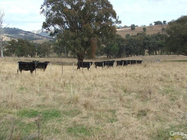 The Farm 830 Weabonga Road, Weabonga NSW 2340