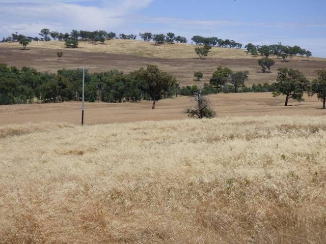 Lot 12 Stockinbingal Road, Cootamundra NSW 2590