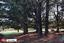 Established Shelter Trees