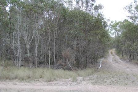 (no street name provided), Dangore QLD 4610