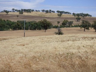 Lot12 Stockinbingal Road