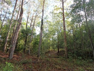 Lot 68 Ashby-Tullymorgan Road Ashby NSW 2463