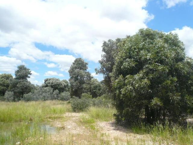 Lot 25 Western Road, Tara QLD 4421