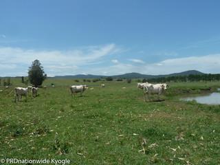 148 Collins Creek Road Kyogle NSW 2474