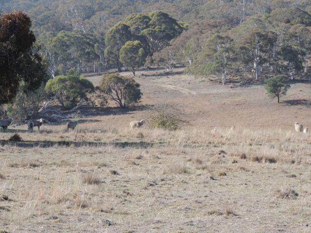 Lot 4 Currawang Road, Currawang NSW 2580
