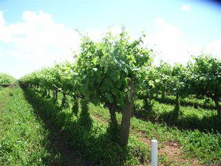Farm 302 Griffith-Yenda Road Bilbul NSW 2680