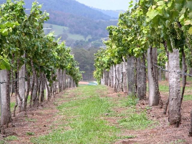 2884 Wallanbah Road, Dyers Crossing NSW 2429