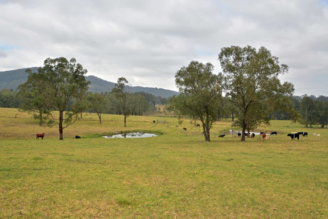 972 Dungog Road, Hilldale NSW 2420