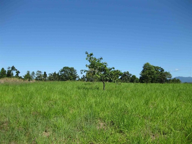 (no street name provided), Silky Oak QLD 4854