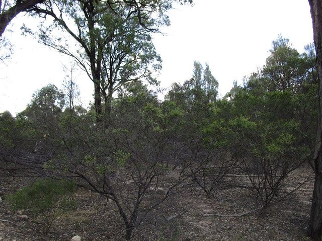 LOT 57 Crosbies Road, Tara QLD 4421