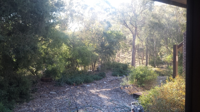 42 Wybalena Grove, Cook ACT 2614