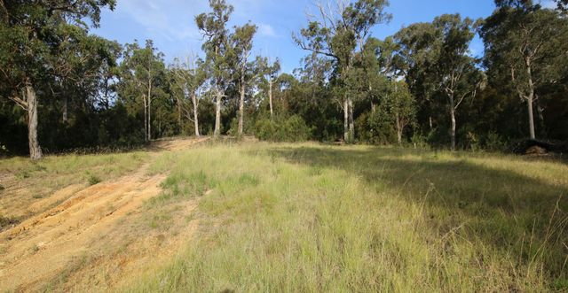 L11 The Wanderer, NSW 2551