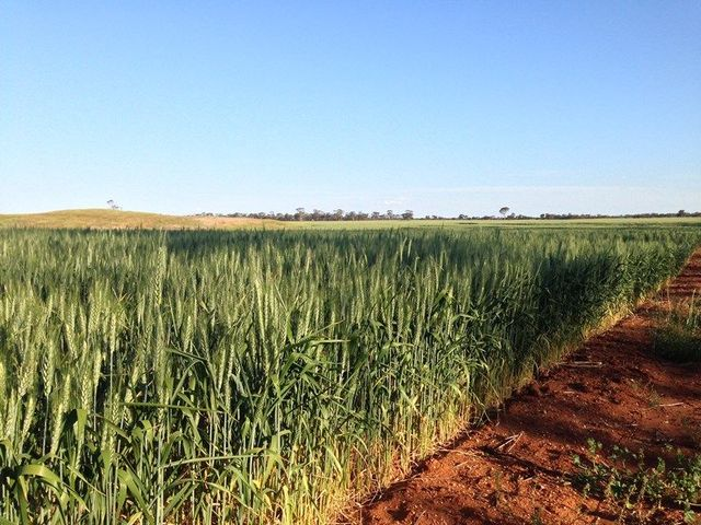 'Elouera' And 'Mayfield Acres', Bodallin WA 6424