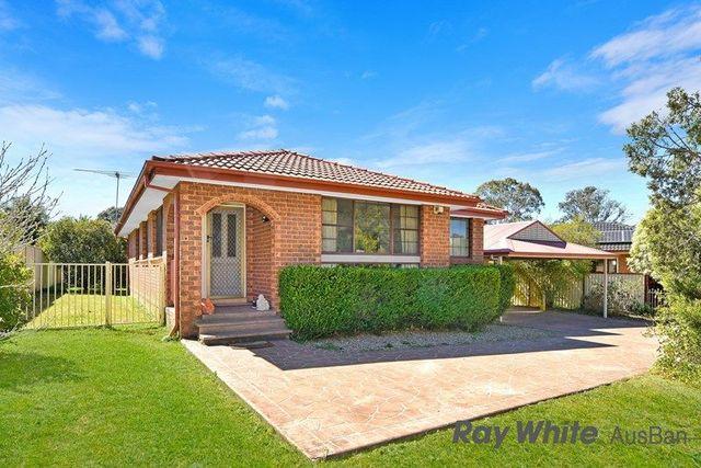 20. Groundsel, Macquarie Fields NSW 2564