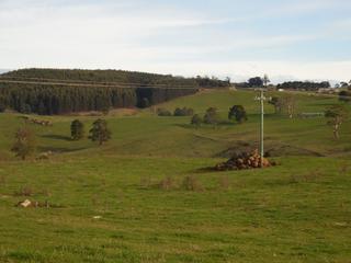 31315 Tasman Highway