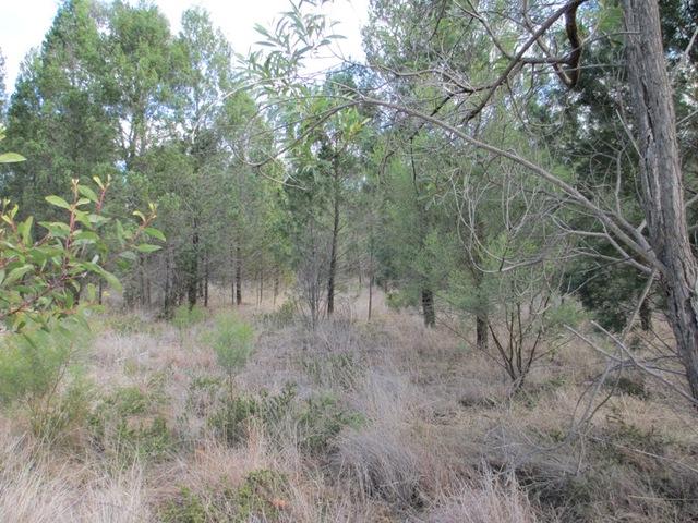 LOT 17 Males Drive, Tara QLD 4421